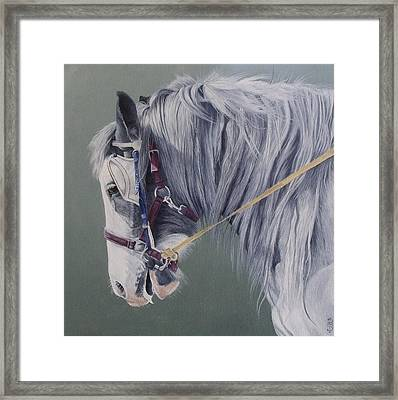 Gypsy Cob Mare-milltown Fair Framed Print by Pauline Sharp