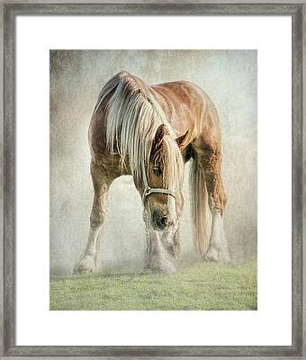 Gypsy In Morning Mist. Framed Print