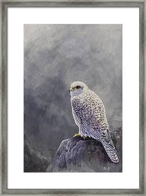 Gyr Falcon Framed Print by Ian Griffiths