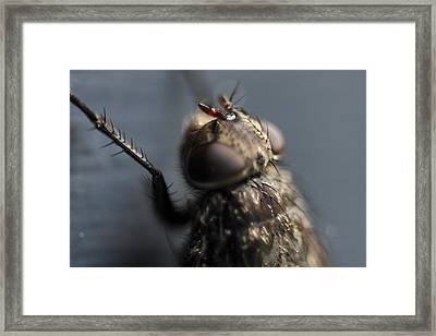 Framed Print featuring the photograph Hair On A Fly by Glenn Gordon