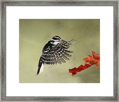 Hairy And The Pin Oaks Framed Print by Gerry Sibell