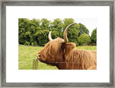 Framed Print featuring the photograph Hairy by Christi Kraft