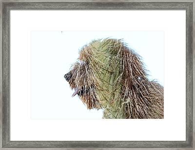 Hairy Doodle Framed Print