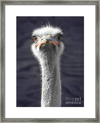 Hairy Fuzzball Framed Print