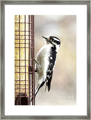 Hairy Woodpecker Framed Print