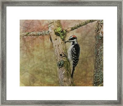 Hairy Woodpecker On Old Tree Framed Print