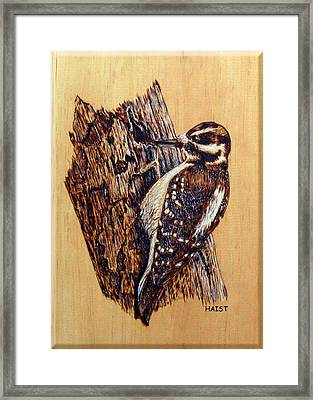 Hairy Woodpecker Framed Print by Ron Haist