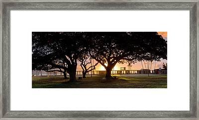 Haleiwa Monkey Pod Framed Print