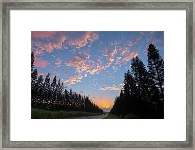 Haleiwa Pines Framed Print