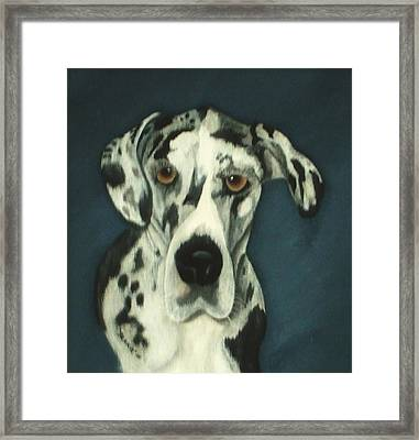 Haley Framed Print by Rebecca  Fitchett