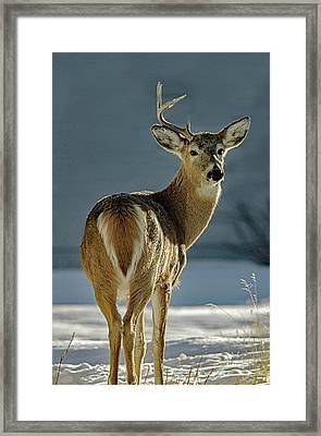 Half A Buck Framed Print