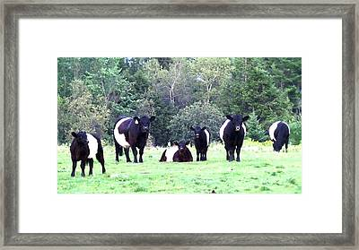 Half A Dozen Oreos Framed Print by Mike Breau
