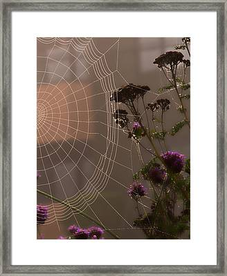 Half A Web Framed Print