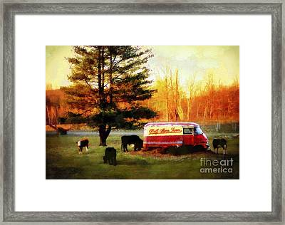 Half Moon Farm Cows Framed Print by Janine Riley