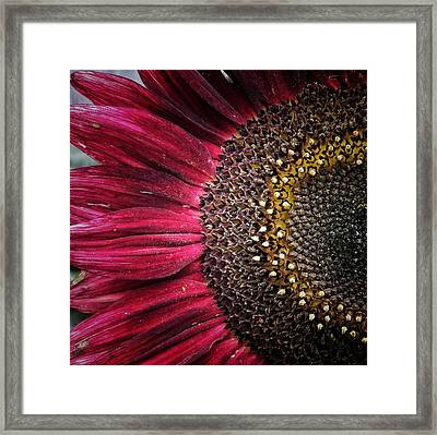 Half Red Framed Print