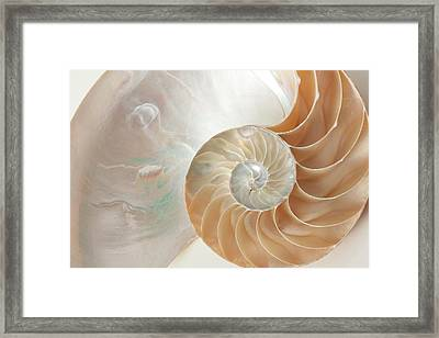 Framed Print featuring the photograph Half  Shell Nautilus by John Hix