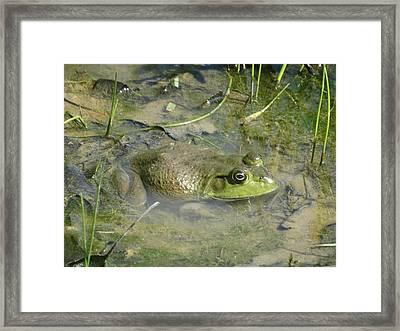 Half Wet Framed Print by Greg Boutz