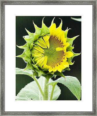 Halfway There Framed Print by Tiffany Erdman