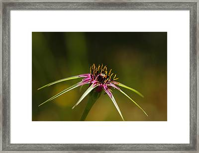 Framed Print featuring the photograph Hallelujah by Richard Patmore
