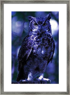 Owl With The Blues Framed Print