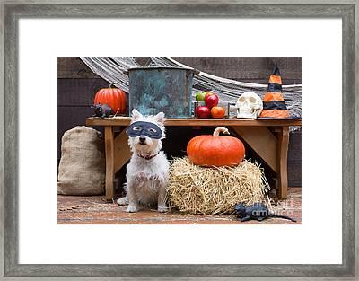 Halloween Party Dog Framed Print