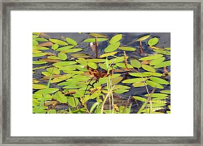Halloween Pennant Dragonfly At Pond Framed Print