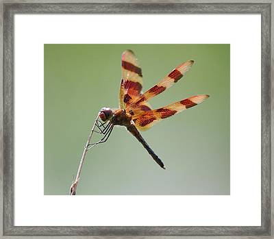 Halloween Pennant Dragonfly Framed Print by Larry Federman