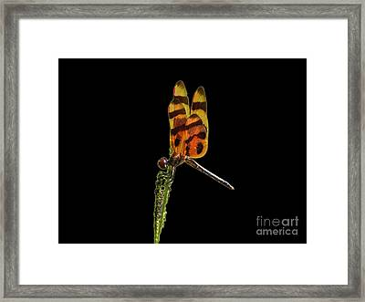 Framed Print featuring the photograph Halloween Pennant Dragonfly .png by Al Powell Photography USA