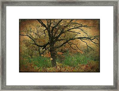 Halloween Tree 2 Framed Print by Scott Kingery