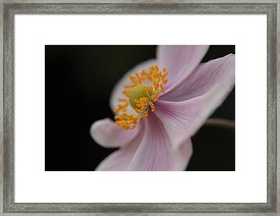 Halo Framed Print by Connie Handscomb