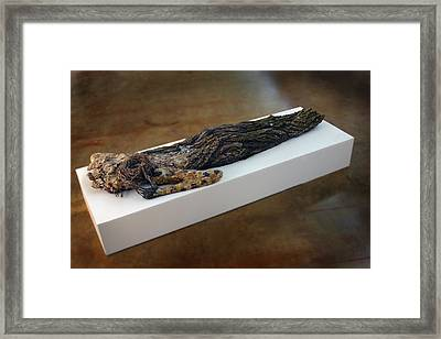 Hamadryad A Sculpture By Adam Long Framed Print by Adam Long