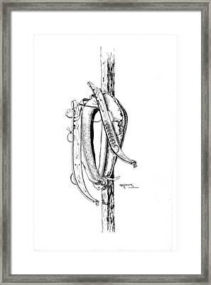 Hame Framed Print by Bob Hallmark