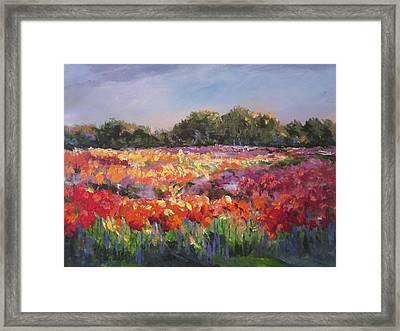 Hamilton Dahlia Farm Framed Print