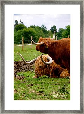 Hamish And Heather Framed Print by Louise Fahy
