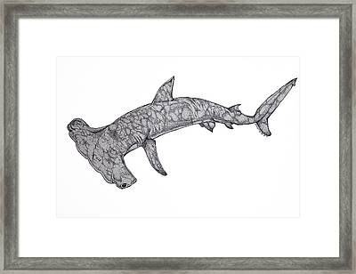 Hammer Head Shark Framed Print by Nick Gustafson