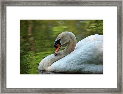 Hammy Swan Framed Print