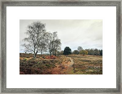 Hampshire Landscape Framed Print by Svetlana Sewell