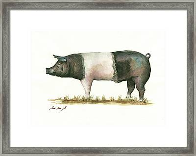 Hampshire Pig Framed Print