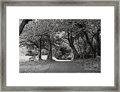 Framed Print featuring the photograph Hana by Cendrine Marrouat