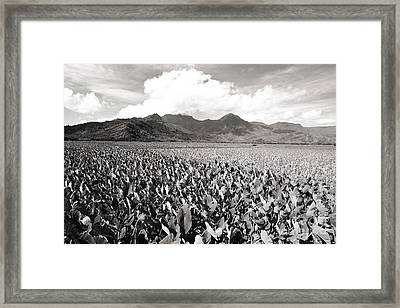 Hanalei Taro Fields Framed Print by Bob Abraham - Printscapes