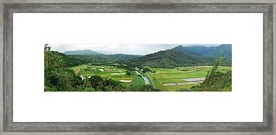 Hanalei Taro Fields Framed Print by Michael Peychich
