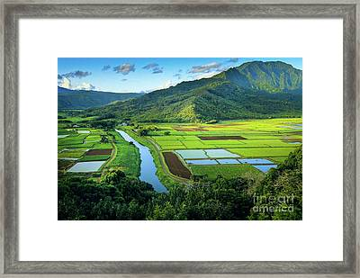 Hanalei Valley Framed Print by Inge Johnsson