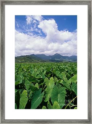 Hanalei Valley Taro Field Framed Print by Joe Carini - Printscapes