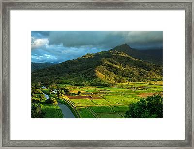 Hanalei Valley Taro Fields Framed Print