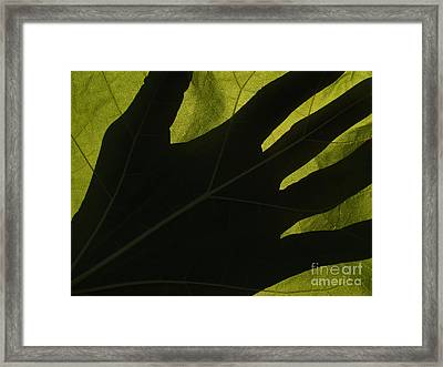 Hand And Catalpa Veins Backlit Framed Print by Anna Lisa Yoder