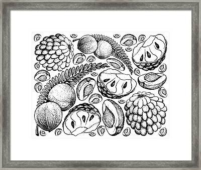Hand Drawn Of Indian Gooseberry And Custard Apple Background Framed Print
