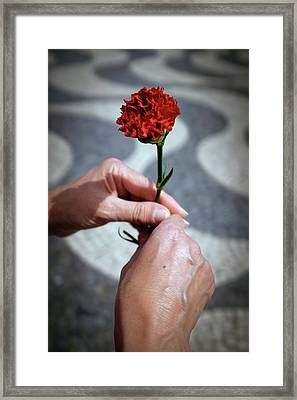 Hands And Carnation Framed Print by Carlos Caetano