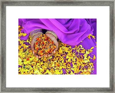 Hands Holding Marigold Petals Framed Print by Tim Gainey