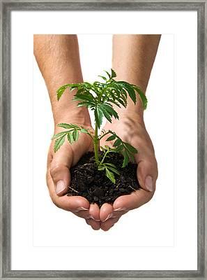Hands Holding Seedling Planted In Soil Framed Print by Brooke Whatnall