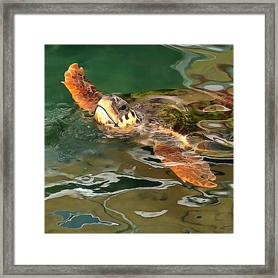 Hands Up For A Plastic Free Ocean Loggerhead Turtle Framed Print